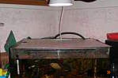 125l Aquarium inkl großen Außenfilter zu verkaufen
