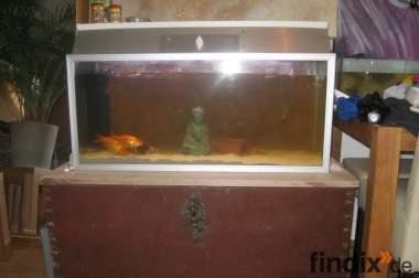 160L Aquarium Komplett Set