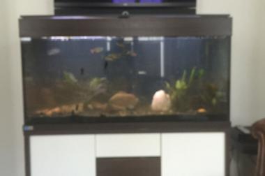 2 Aquarien