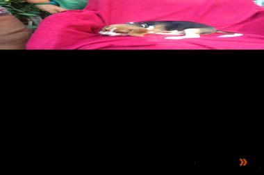 2 Beagle Mädchen