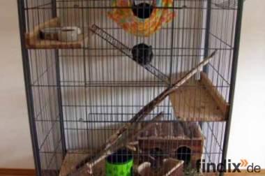 2 Chinchillas mit Käfig in liebevolle Hände abzugeben