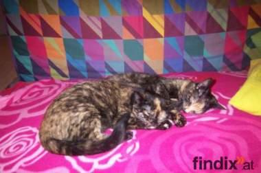 2 junge Katzenschwestern suchen neues Zuhause!