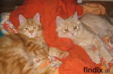 2 Süße Kätzchen zu vergeben