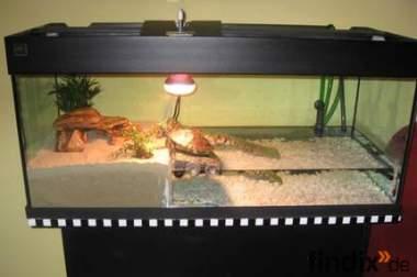 2 Wasserschildkröten mit Zubehör