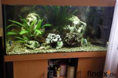 300 L Aquarium von Juwel mit viel Zubehör Buche-Optik