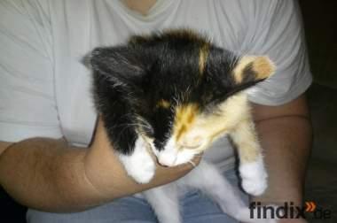 4 süsse katzenbabys suchen ein neues zuhause