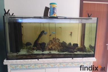 470l aquarium