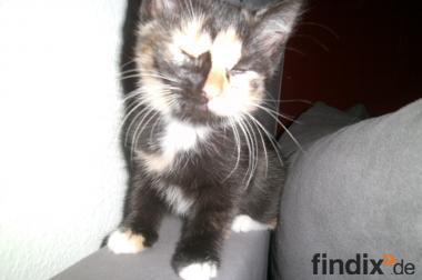 5 Katzenbabys suchen Dosenöffner 11 Wochen alt