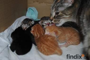 5 süße Katzenbabys zu verschenken