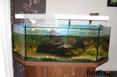 6 eck aquarium hinten gerade mit besatz und zubeh r 408917. Black Bedroom Furniture Sets. Home Design Ideas