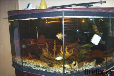 7 Eckiges Aquarium komplet