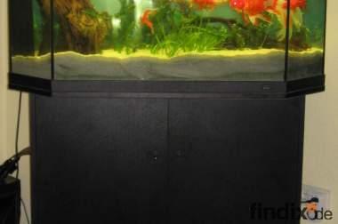 Aquarium mit Schrank und Abdeckung Marke: Juwel ca.120-140Liter