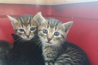 Baby Katzen suchen ein liebevolles zuhause!