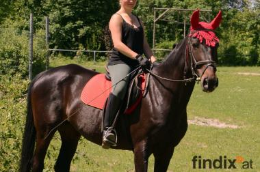 Beistellpferd abzugeben, bedingt reitbar (Schritt)