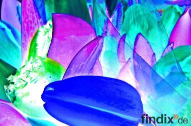 """Bild """"blue""""  Fotoleinwand"""