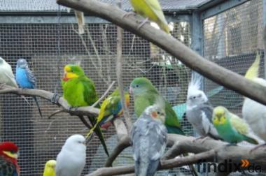 Birds Oase