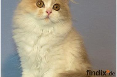 BLH Kätzchen - einfach anschauen und verlieben