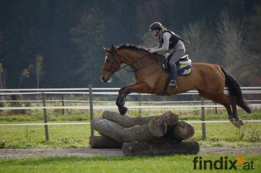 Charakter Pferd Sucht schönen Platz