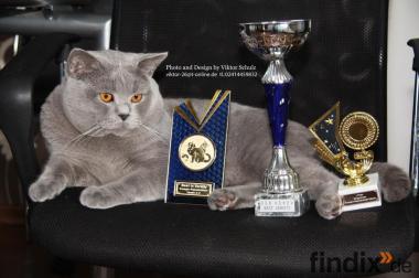 Deckkater BKH Europa Champion Blutgruppe B