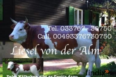 Deko Kuh lebensgross inkl. Deko Kalb ……per Spedionsversand / DE