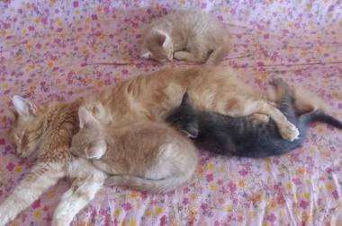 Drei süße und verspielte Kätzchen zu verkaufen