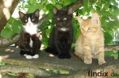 Drei süße Katzenkinder suchen liebevolles Zuhause