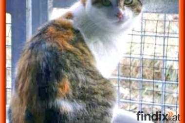 Dreifarbige verschmuste Lina sucht liebevolles Zuhause