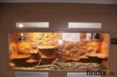 Edel Holz Terrarium 180cmx70cmx110cm +2 Bartagamen