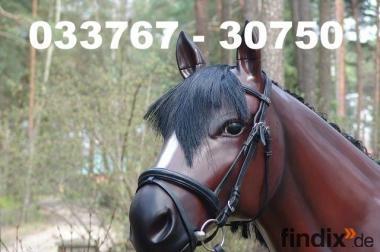 Es gibt Deko Pferde / Deco Horse / Deko Pferd  / Deco Horses ...