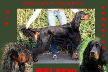 Gordon Setter Wurferwartung