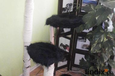 Handanfertigung Naturkratzbaum Sehr Stabil!!!!
