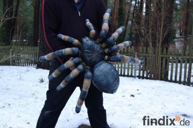 Hasste Lust auf eine Deko Spinne?