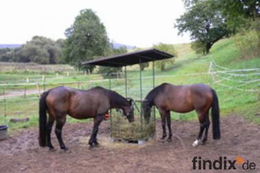 Heuraufe KLEIN (11) für Pferde etc. mit Dach und 2 V-Ausschnitten