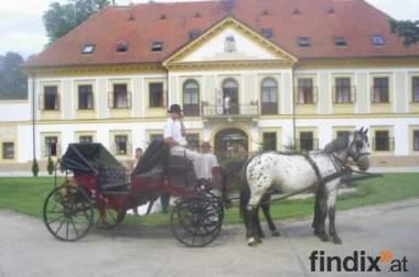 Hochzeitskutsche, Planwagen zu mieten.