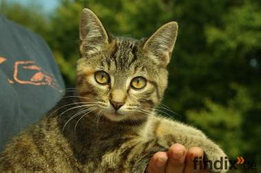 hübsches Katzenbaby Mädchen kitten 4 Monate abzugeben