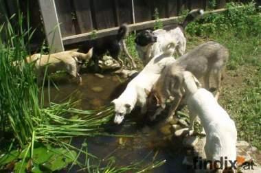 Hundebetreuung / Tagesbetreuung