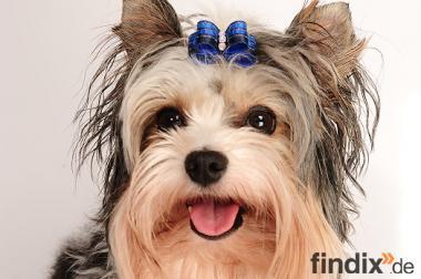 Hundepflege allround auch Hausbesuche möglich für kleine Hunde