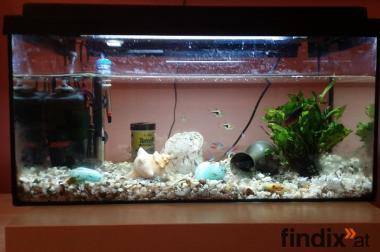Ich verkaufe meinen Aquarium mit Fische und Dekoration dabei