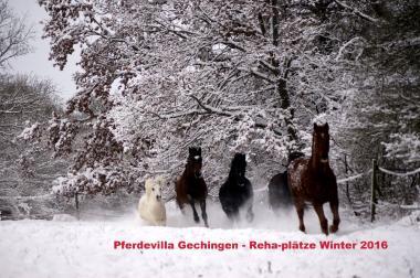 Ihr Pferd braucht eine Winterpause? Reha-Plätze mit VP