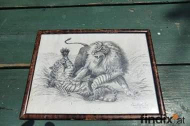 Kämpfende Löwen Dusche zeichnung