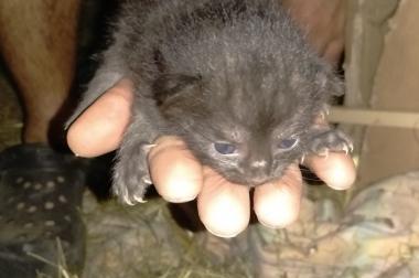Kätzchen weiblich