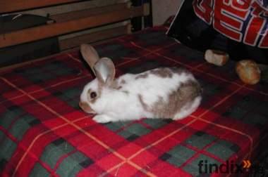 Kaninchen, Handaufzucht