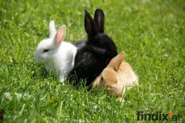 Kaninchen, verschiedene Farben
