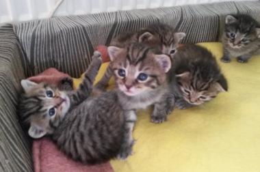 Katzenbabys zu vergeben