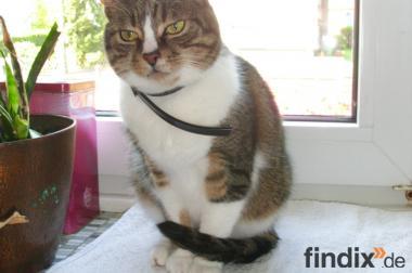 Katze Kira