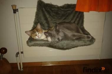 Katzenheizkörper liege