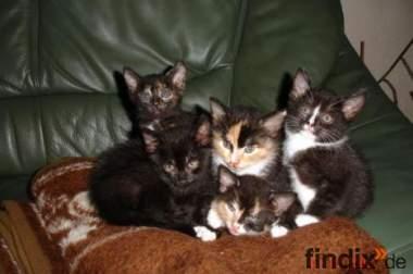 Katzenkinder suchen ein Zuhause!