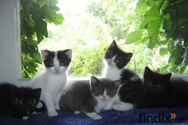 Katzenkinder suchen paarweise Freilaufplätze