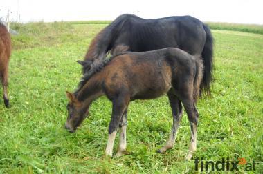 Kinderreitwoche im schönen Waldviertel am Ponyhof