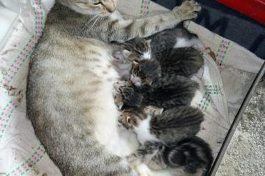 Kitten Katzen Babys